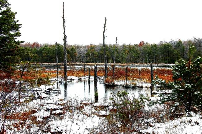 WV winter swamp